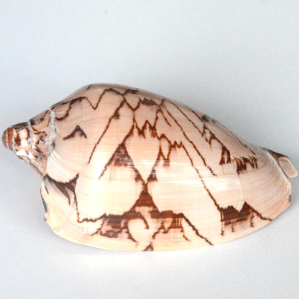 shell-medium-3